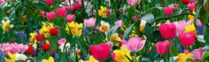 Adorno de flores para bodas. Flores para tocados tiaras Coronas Semicoronas Diademas Peinetas Horquillas