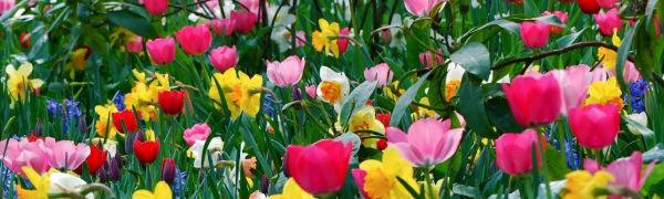 Flores de muchos colores para tocados de novia y primera comunión